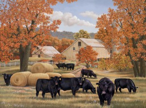 Autumn Angus