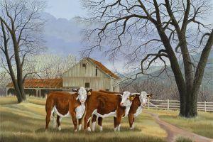 Spring Heifers